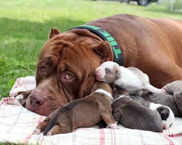 beneficios de la esterilización en perros
