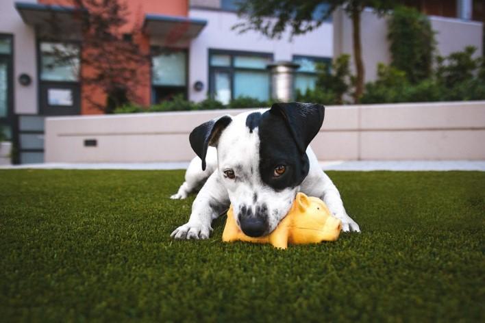 ¿Qué hacer si mi perro se traga un objeto?