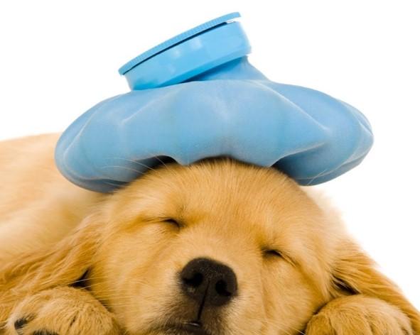 síntomas de obstrucción en perros