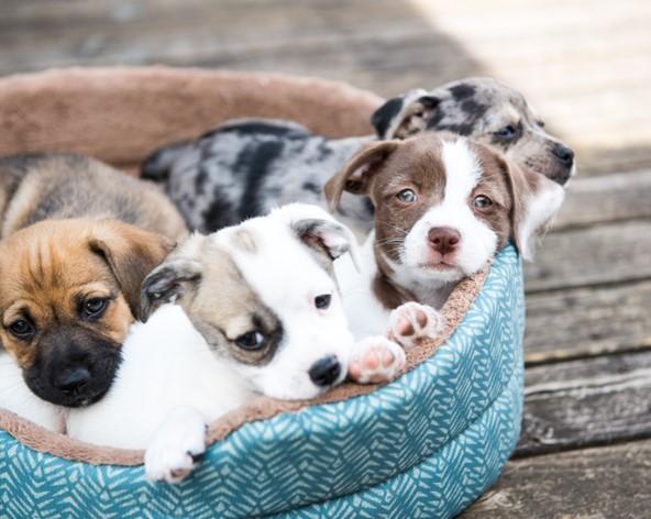 cuidados básicos para perros cachorros